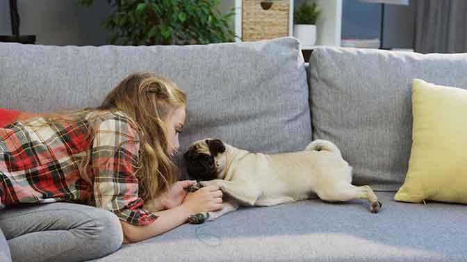 Pug bonding activities