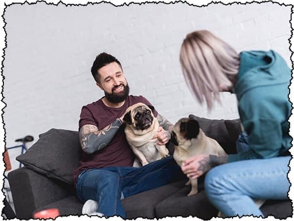 adopting a pug