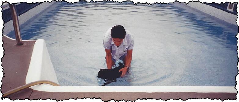 do pugs like to swim