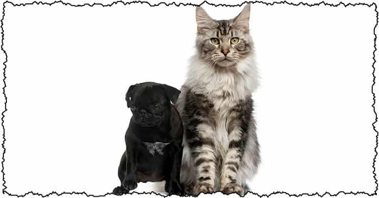 do pugs get alone with cats