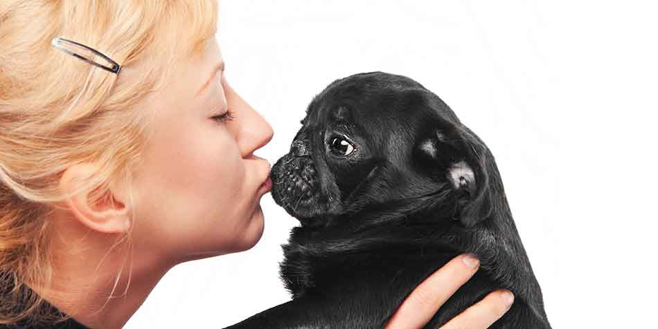 why are pugs so popular