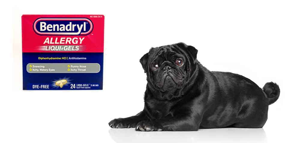 benadryl for pugs