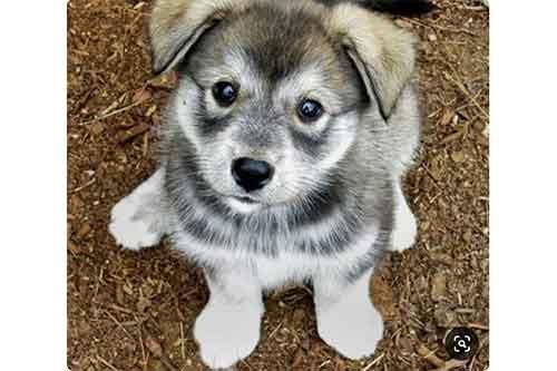 hug puppy