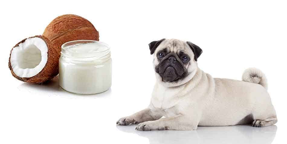 is coconut oil good for pugs