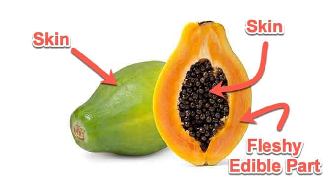 Anatomy of a papaya