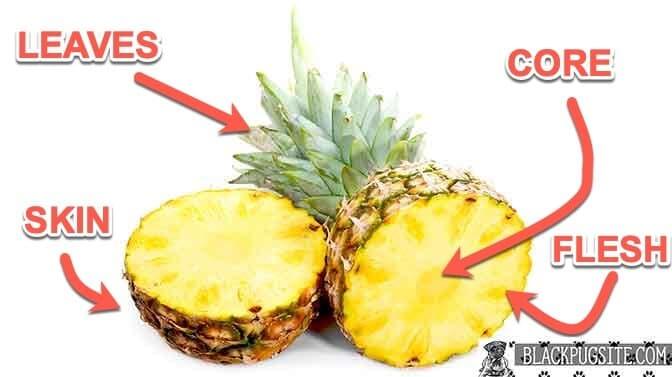 anatomy of a pineapple