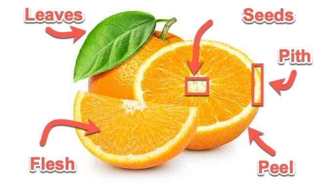 anatomy of an orange