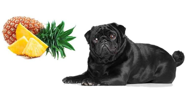 can pugs eat pineapple