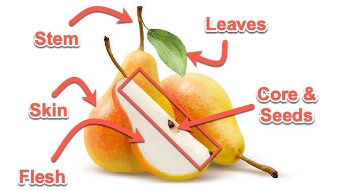 anatomy of a pear