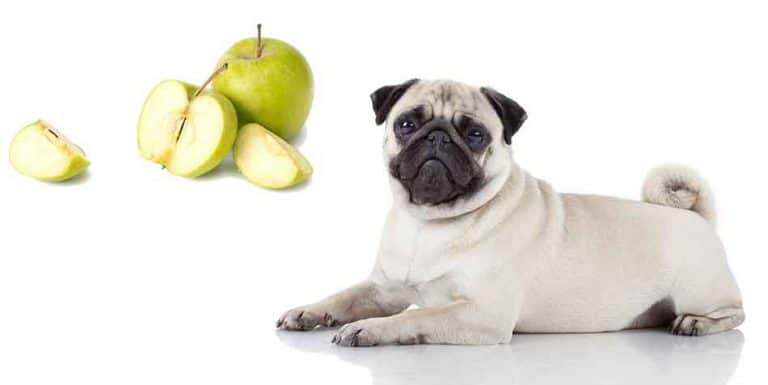 can pugs eat apples