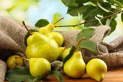 feeding your Pug pears
