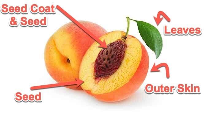 anatomy of a peach