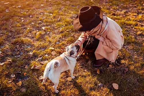 how to pet a pug