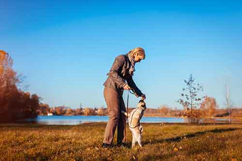 how to stop a dog from jumping and nipping
