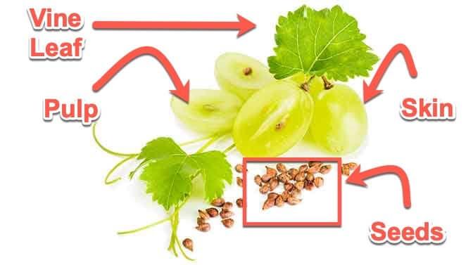 anatomy of a grape