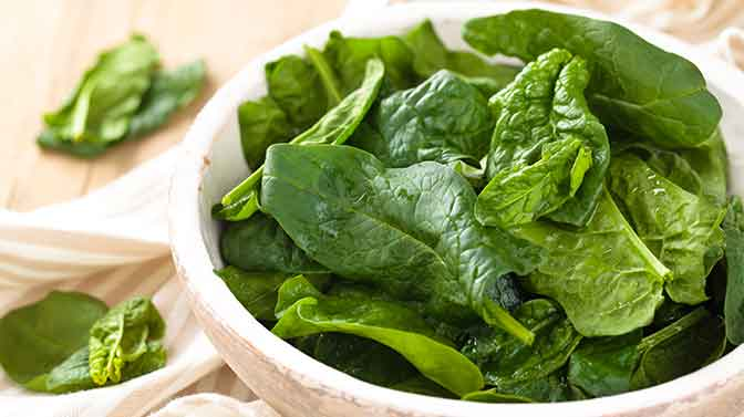 is spinach safe for pugs