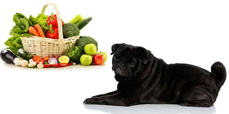 can pugs eat vegetables