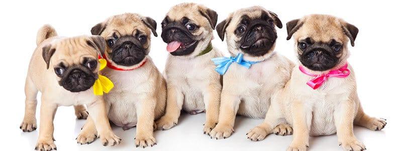 cute pug names
