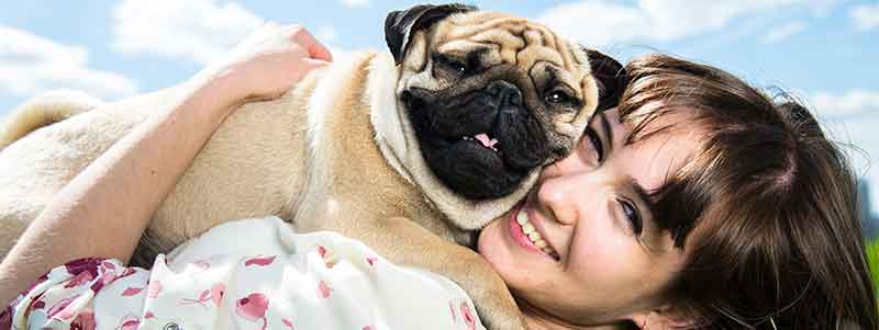do pugs love their owners