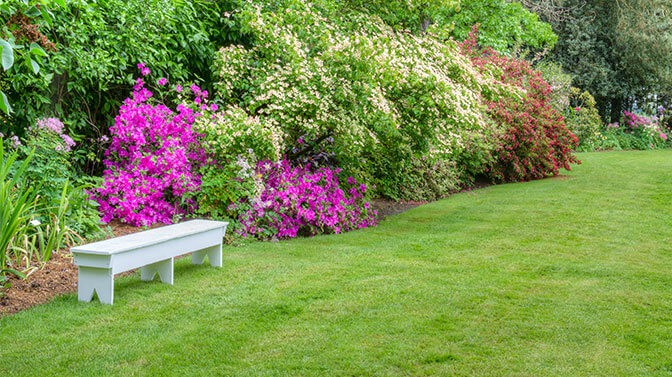 azaleas are toxic to Pugs