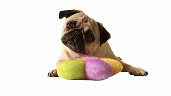 best chew toys for pugs