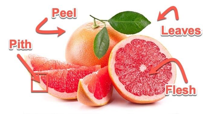is grapefruit safe for pugs
