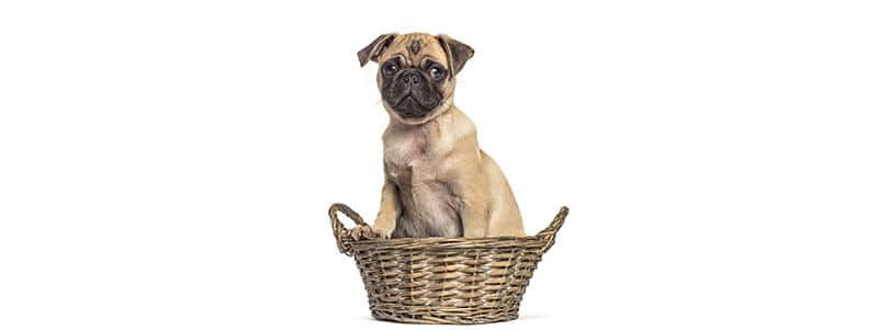 Pug names that start with B
