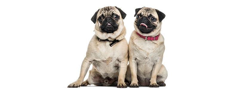 Pug names that start with m