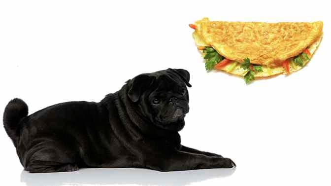 can pugs eat eggs