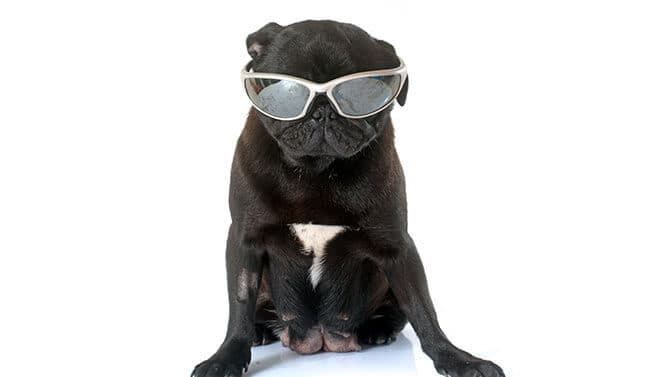 cool Pug names with the letter L