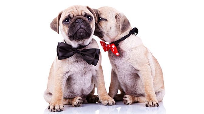 cute dog names for Pugs starting with J