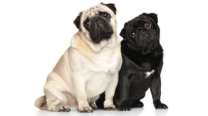 pug names beginning with F