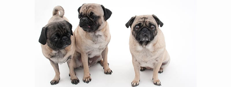 Pug names that start with F