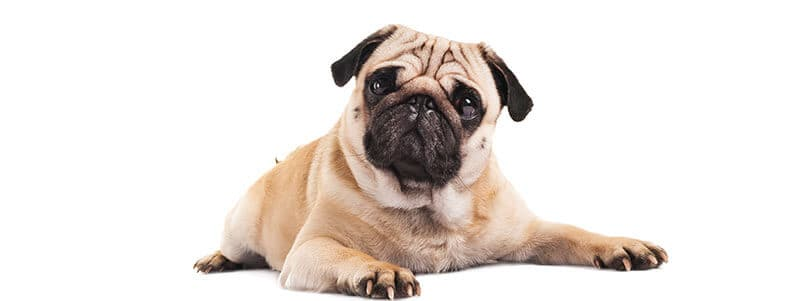 pug names that start with c