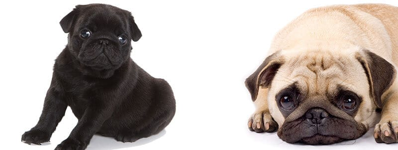 Pug names that start with J