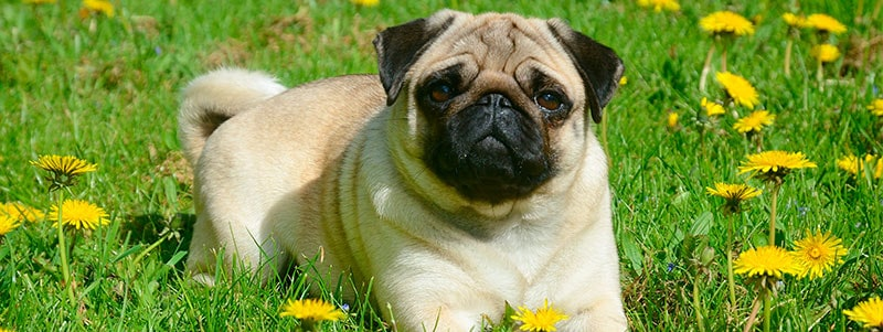 pug names that start with K