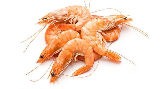 Pugs and shrimp