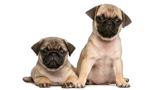 unique female pug names
