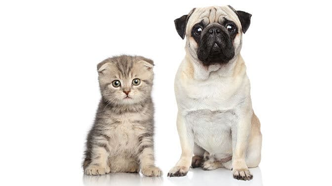 unique Pug names beginning with R