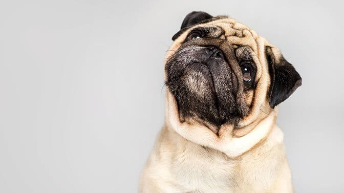 unique pug names starting with n