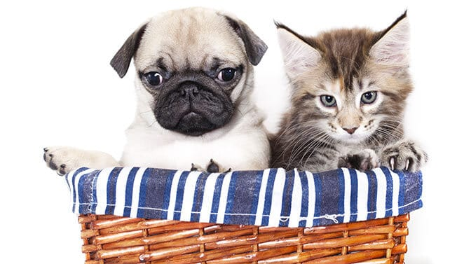 are dogs more obedient than cats