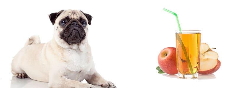 can pugs drink apple juice