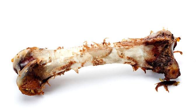 can pugs eat turkey bones