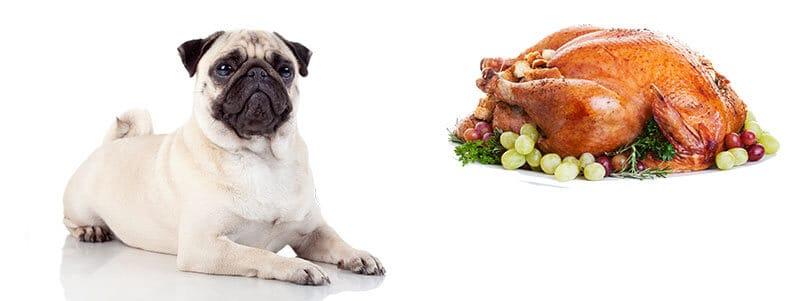 can pugs eat turkey