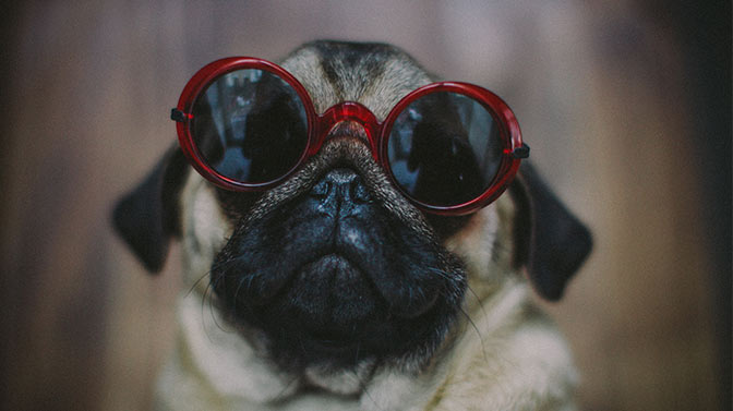cool a Pug dog names