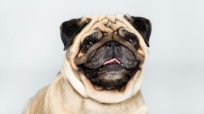 cool pug names for females