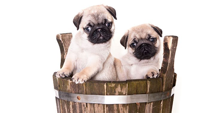 cute Pug names beginning with a
