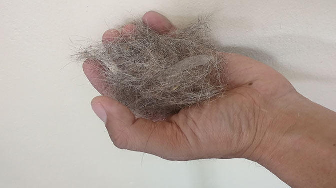 dog hair falling out in clumps