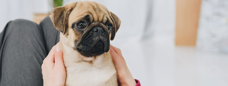 Pug names that start with O