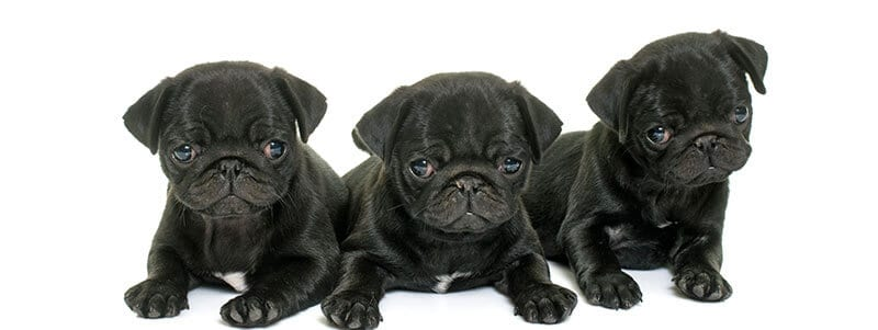pug names that start with a